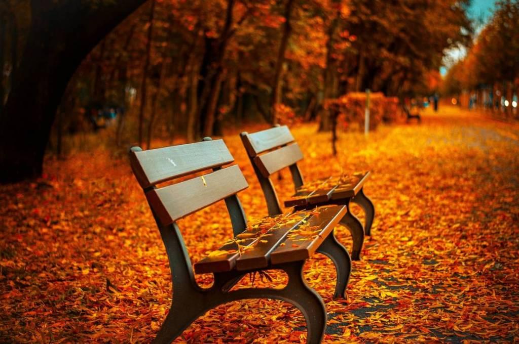 秋は恋愛をしたくなる
